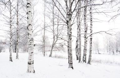 Vinter vid Skellefteälven